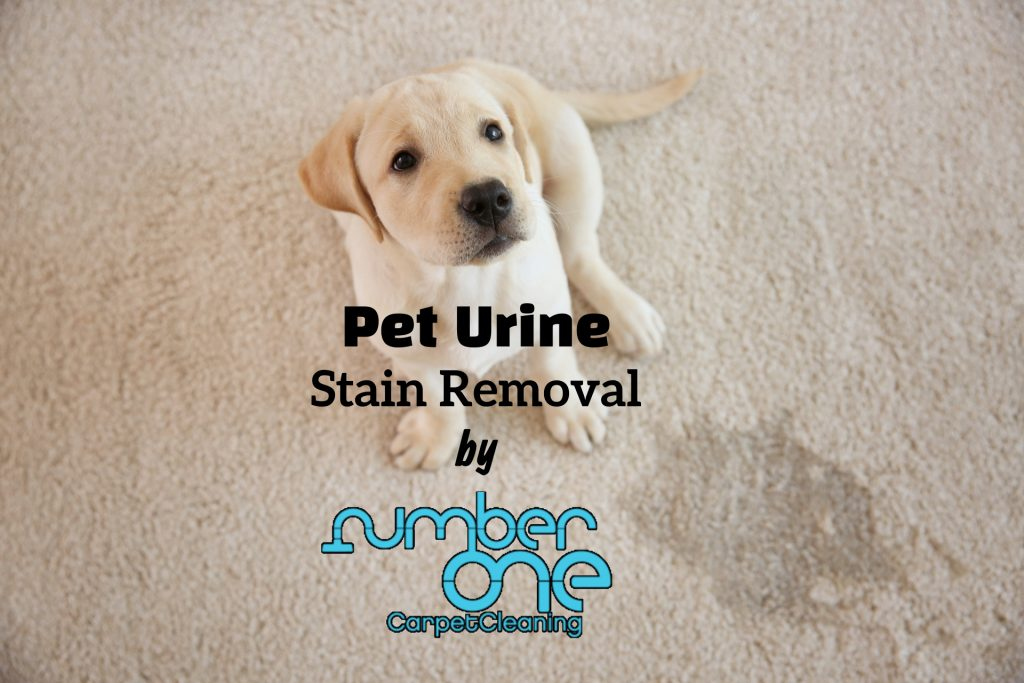 What can pet urine do to my carpets?